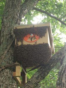 Swarm trap day 2