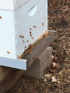 January 2017 Bee Activity